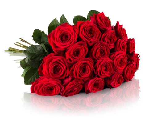 01-0000-rosenbymiflora-rednaomi-liegend-pb2_9_4